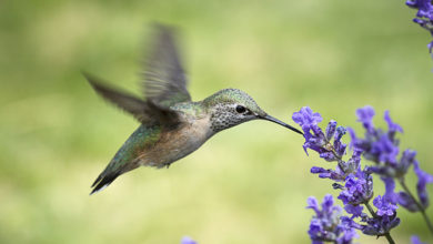 Photo of Agile PMOs: The Hummingbirds of Project Management